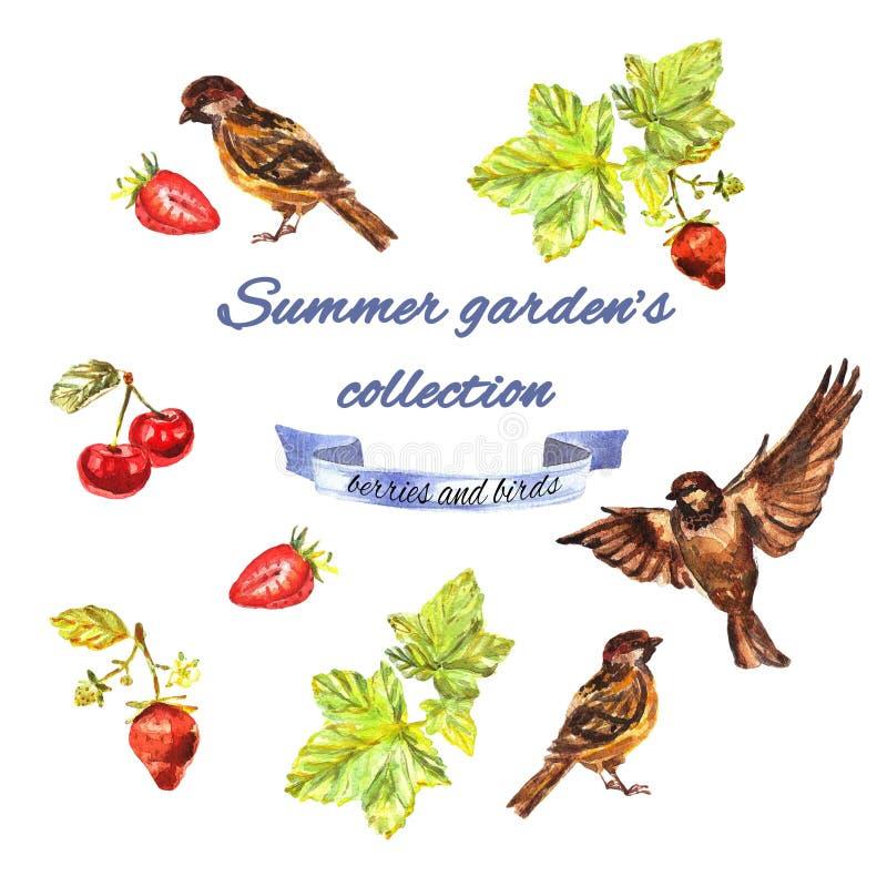 Sommarträdgårds samling med vinbäret, sparvar, jordgubbar, körsbär stock illustrationer