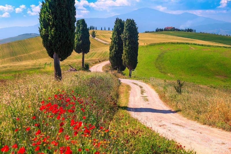 SommarTuscany landskap med kornfält och den lantliga vägen, Italien arkivbild
