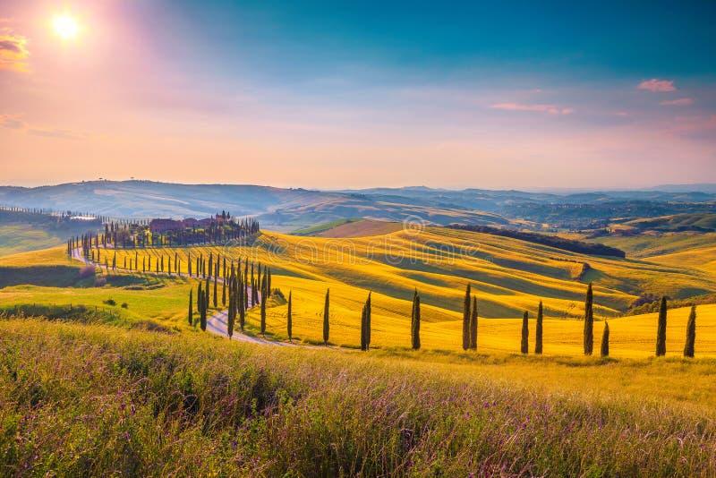 SommarTuscany landskap p? eftermiddagen med den kr?kta lantliga v?gen, Italien royaltyfria bilder