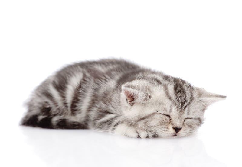 Sommeil écossais de chaton D'isolement sur le fond blanc photos stock