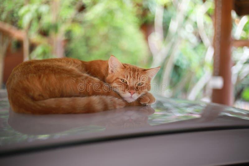 Sommeil de chat sur la voiture de toit photos stock