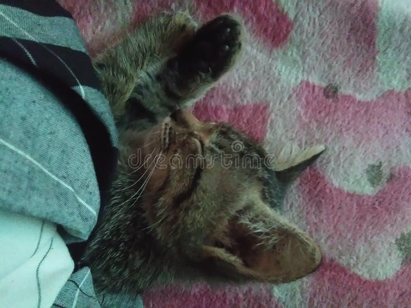 Sommeil de Kitty image stock