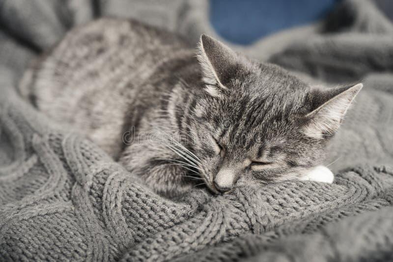 Sommeil gris de chat image stock