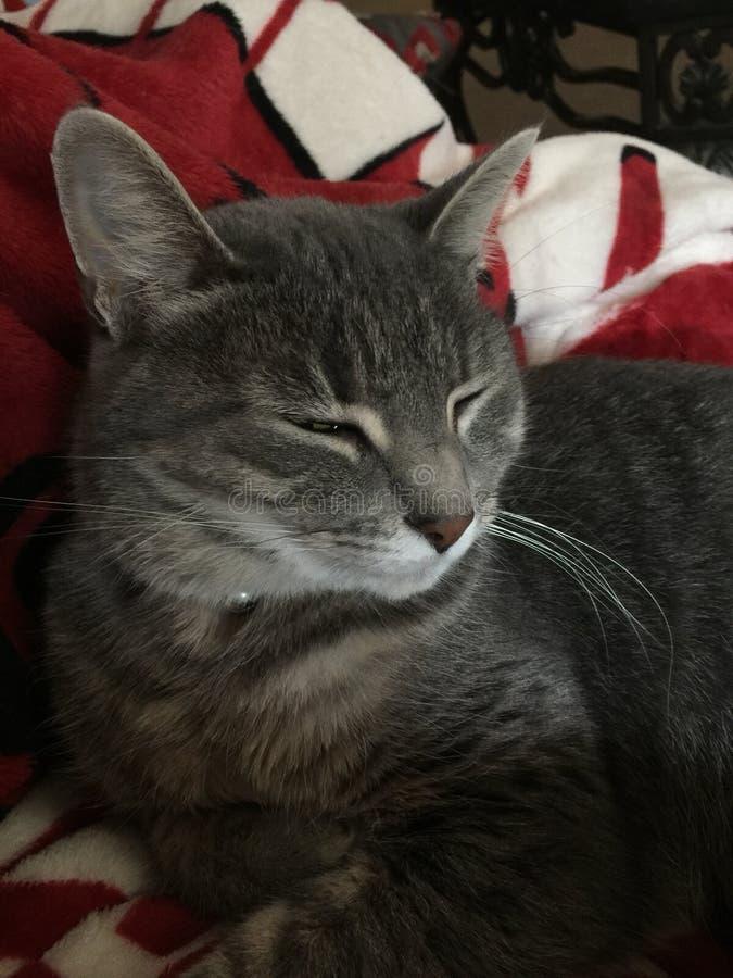 Sommeil Kitty photos stock