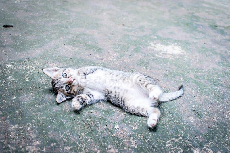Sommeil mignon de chat photo libre de droits