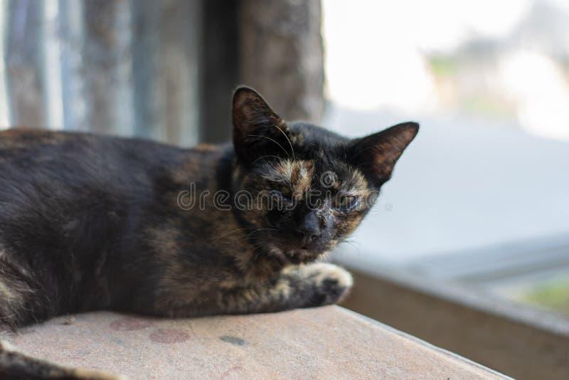 Sommeil ray? noir et orange de chat images libres de droits