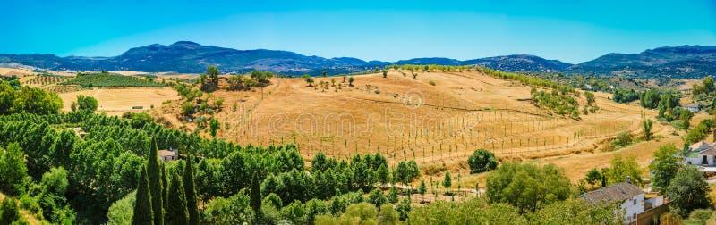 Sommer Andalusian Lanscape nahe Ronda, Provinz von lizenzfreies stockfoto