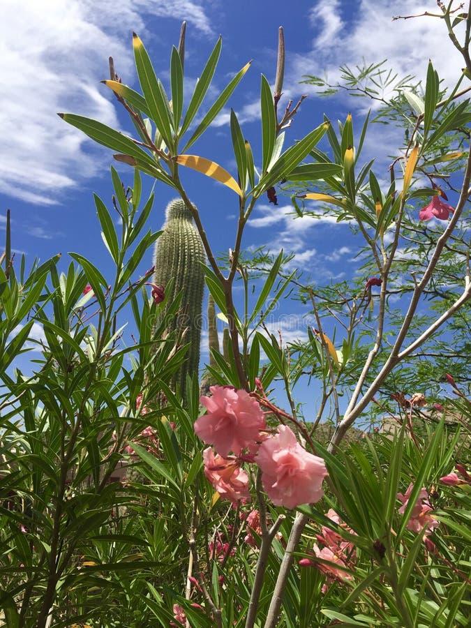 Sommer in Arizona stockfotografie