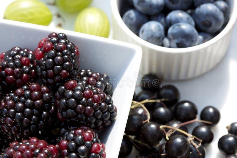 Sommer-Beeren - Blaubeeren, Brombeeren, schwarze Johannisbeeren und Stachelbeeren im Sonnenlicht lizenzfreie stockfotografie