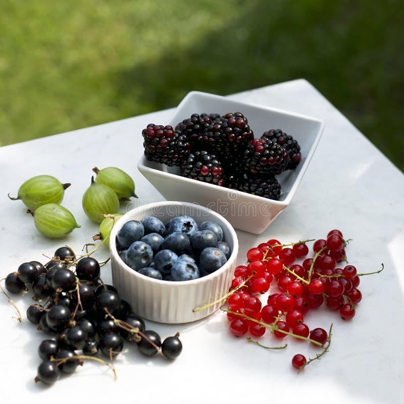 Sommer-Beeren - Brombeeren, rote Johannisbeeren, Stachelbeeren, Blaubeeren und schwarze Johannisbeeren im Sonnenlicht stockfoto