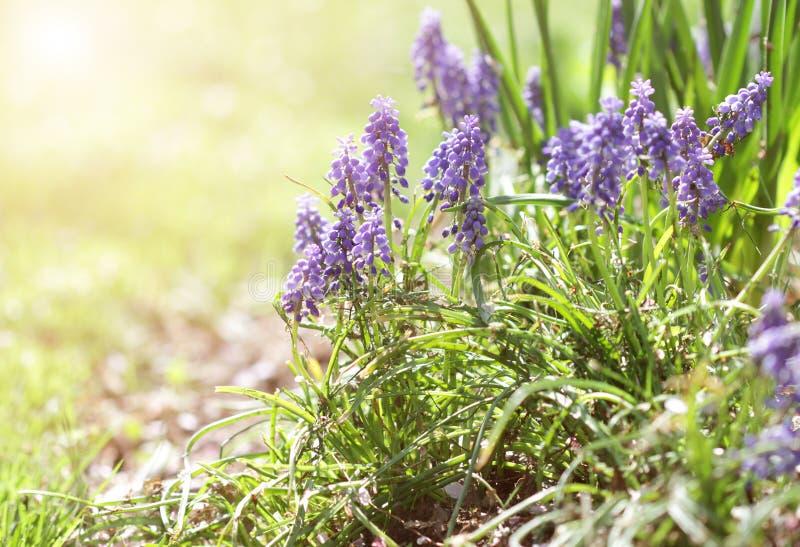 Sommer Blüht Hintergrund Stockfoto