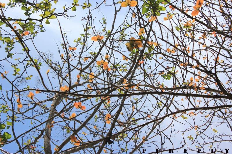 Sommer-Blüten stockbild
