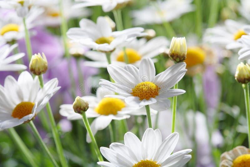 Sommer-Blumen lizenzfreies stockbild