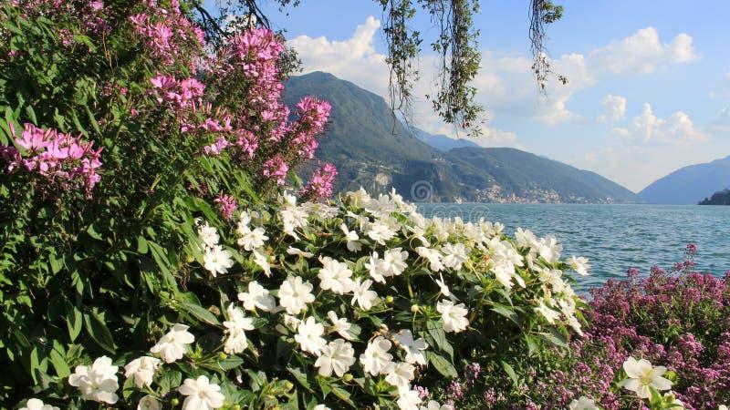 Sommer-Blumen-Garten und blauer See lizenzfreie stockfotos