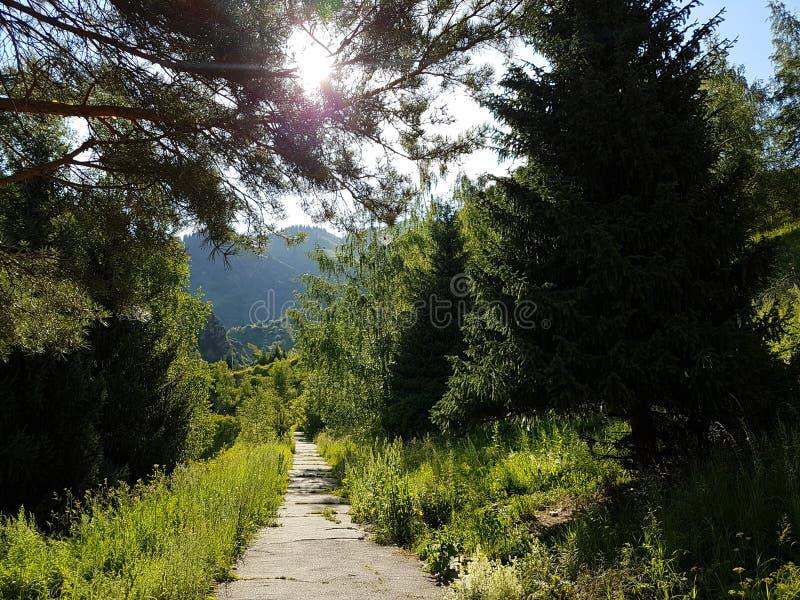 Sommer in den Bergen stockbild