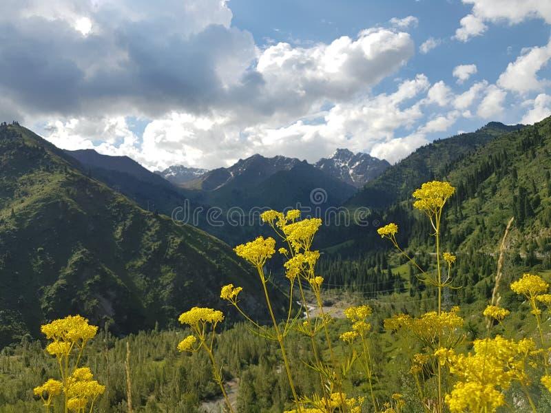 Sommer in den Bergen stockfotos