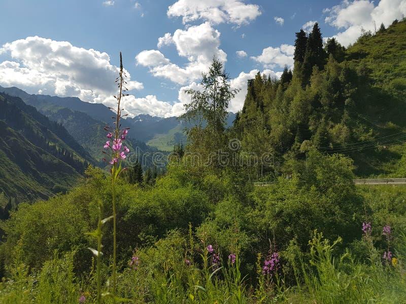 Sommer in den Bergen lizenzfreie stockbilder