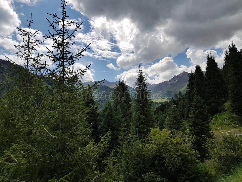 Sommer in den Bergen lizenzfreies stockbild