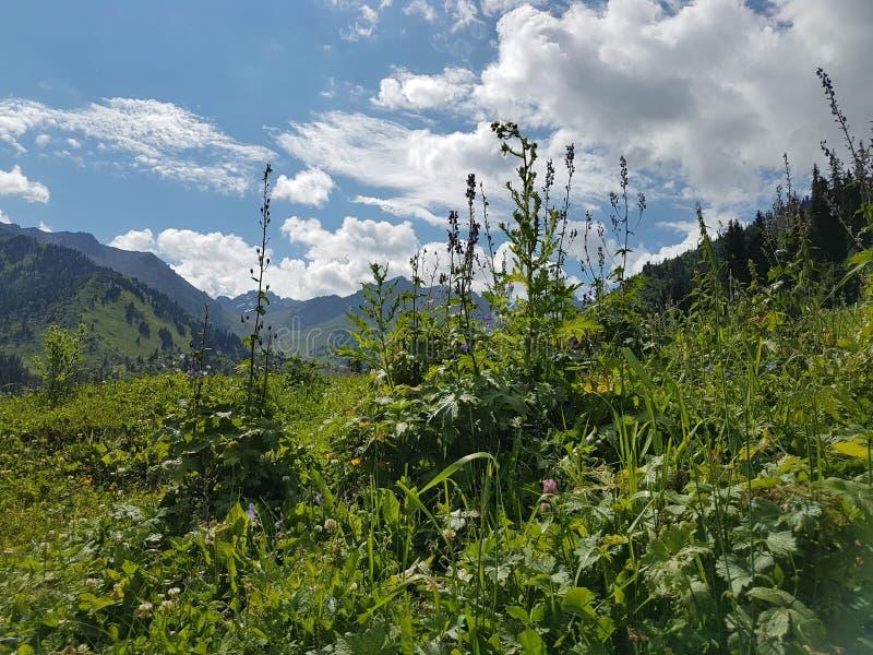 Sommer in den Bergen stockbilder