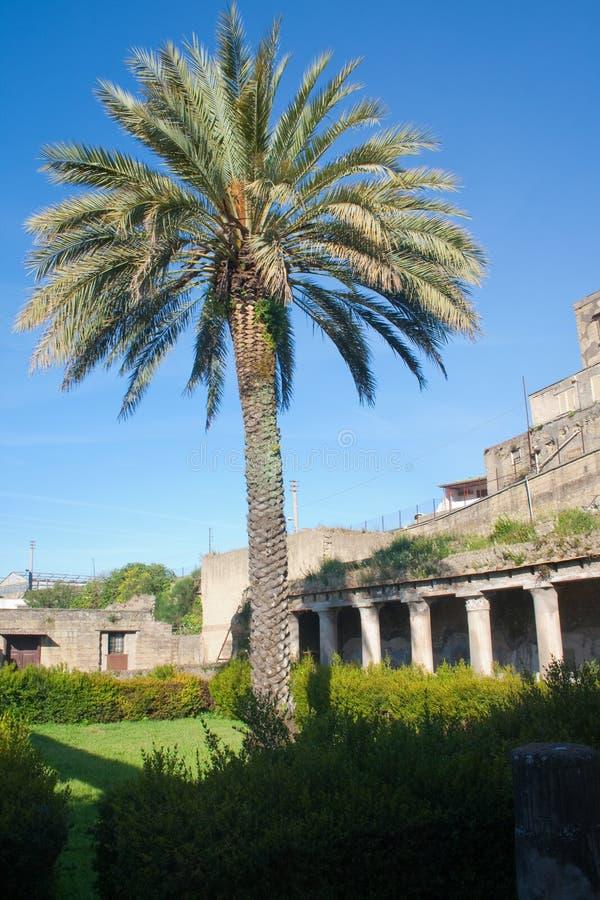Sommer in der Italien-Palme in den Ercolano Ruinen stockfoto