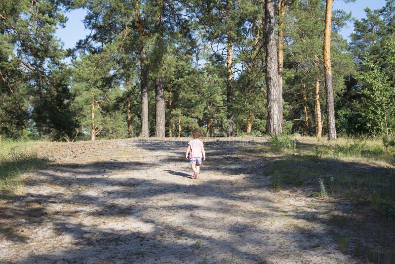 Sommer in einem Kiefernwald ist ein kleines Mädchen stockfotografie