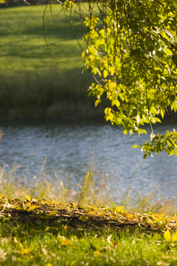 Sommer-Fluss stockfotos