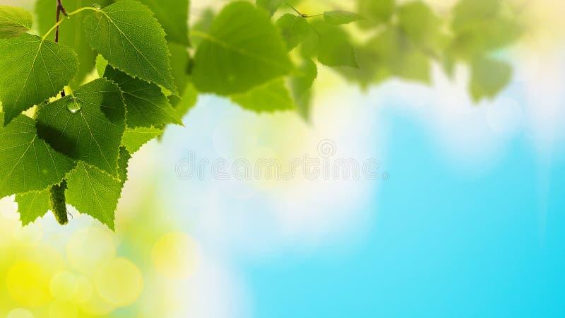 Sommer Forrest stockbild