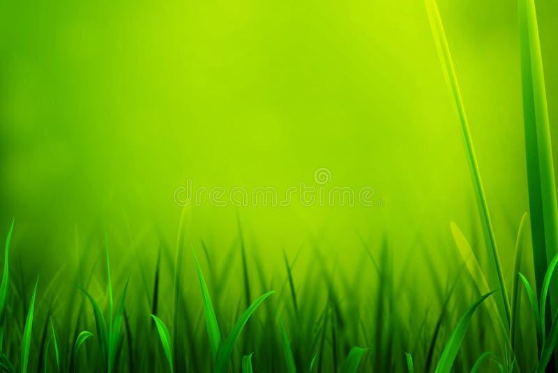 Sommer-Frühlings-Grün lizenzfreies stockfoto