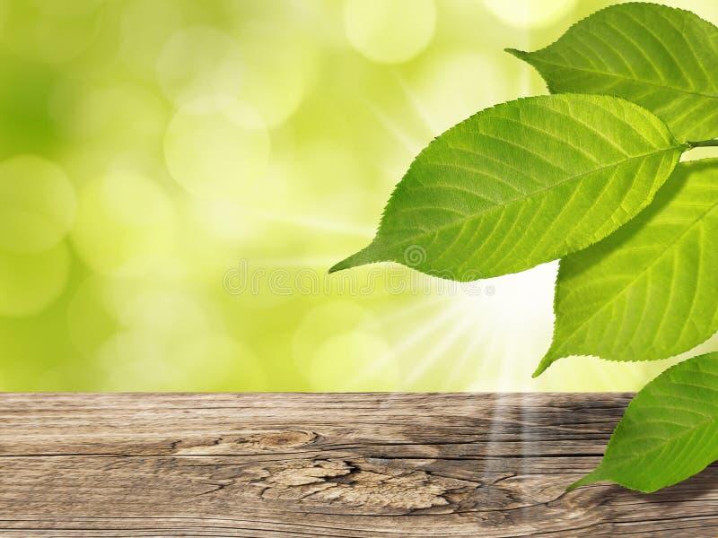 Sommer-Frühlings-Hintergrund mit grünem Baum verlässt Holztisch-Sonnenlicht und Sun-Strahlen stockfotos