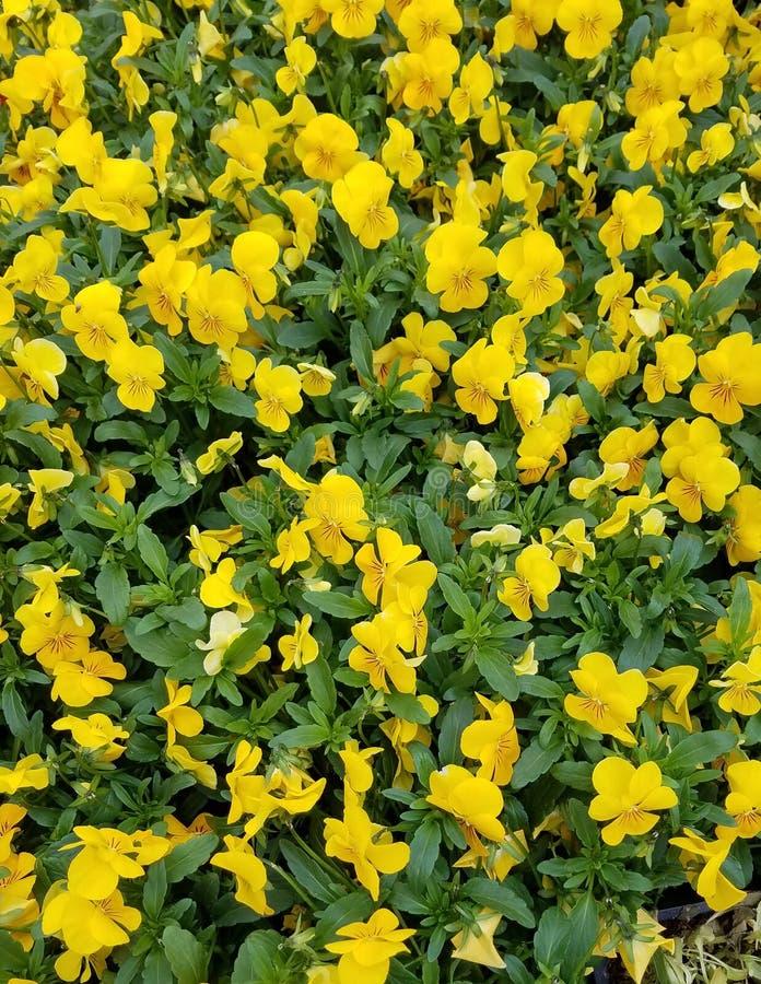Sommer-gelbe Blumen lizenzfreies stockfoto
