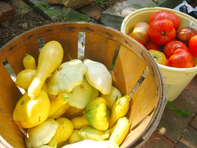 Sommer-Gemüse stockfotos