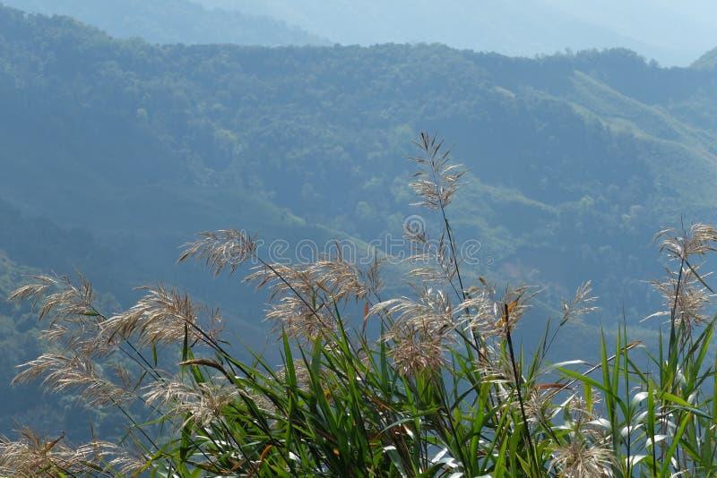 Sommer-Hügel stockfotografie
