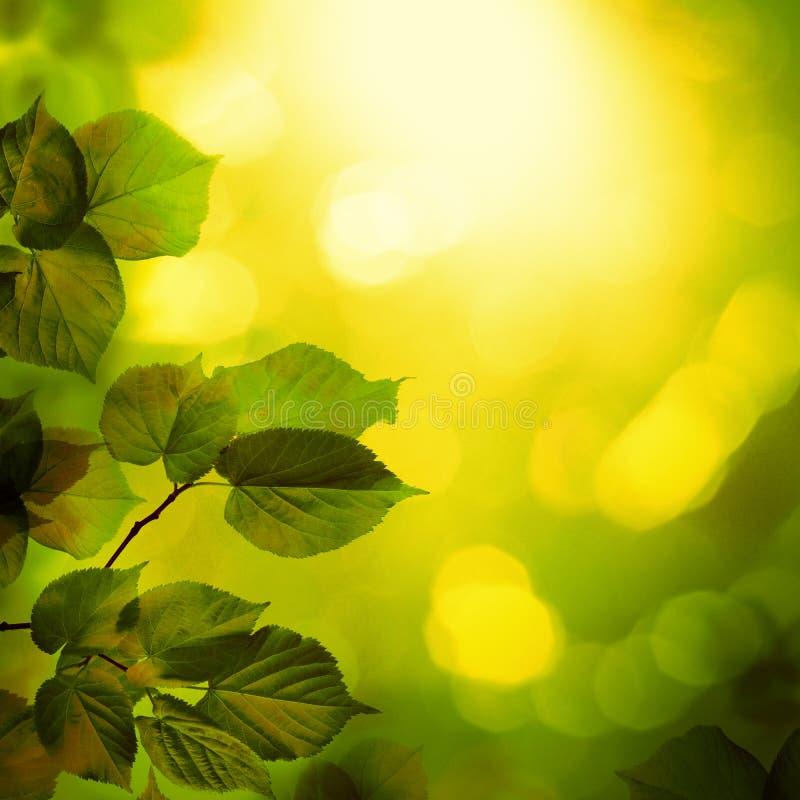 Sommer-Hintergrund mit Linden Tree Twigs lizenzfreies stockfoto