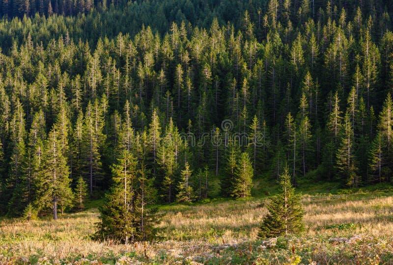 Sommer Ihrovets-Bergblick Karpaten, Ukraine stockfotos