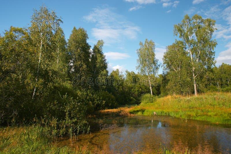 Sommer im sibirischen Wald stockfotos