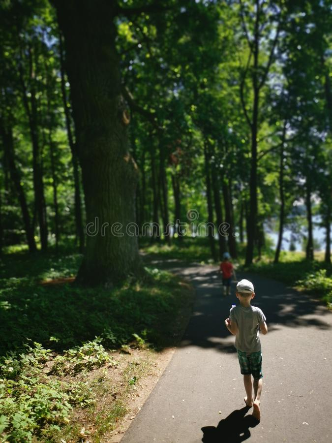 Sommer im Wald lizenzfreies stockfoto