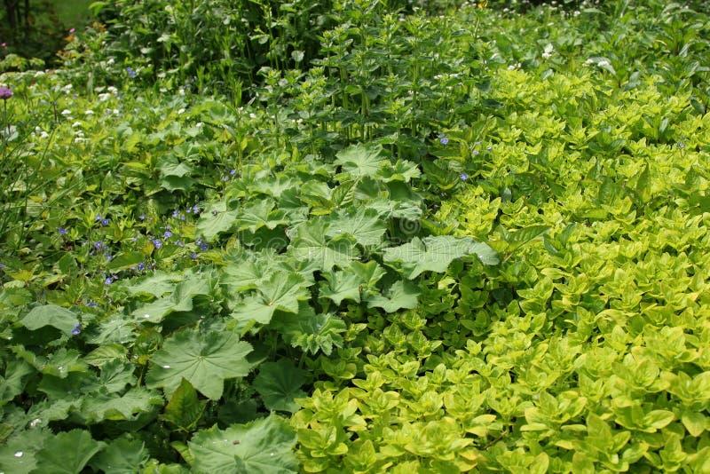 Sommer-Kraut-Garten stockfotografie
