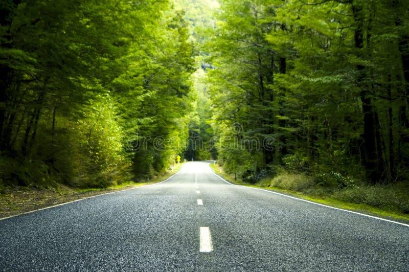 Sommer-Land-Straße mit Bäumen dazu lizenzfreies stockfoto