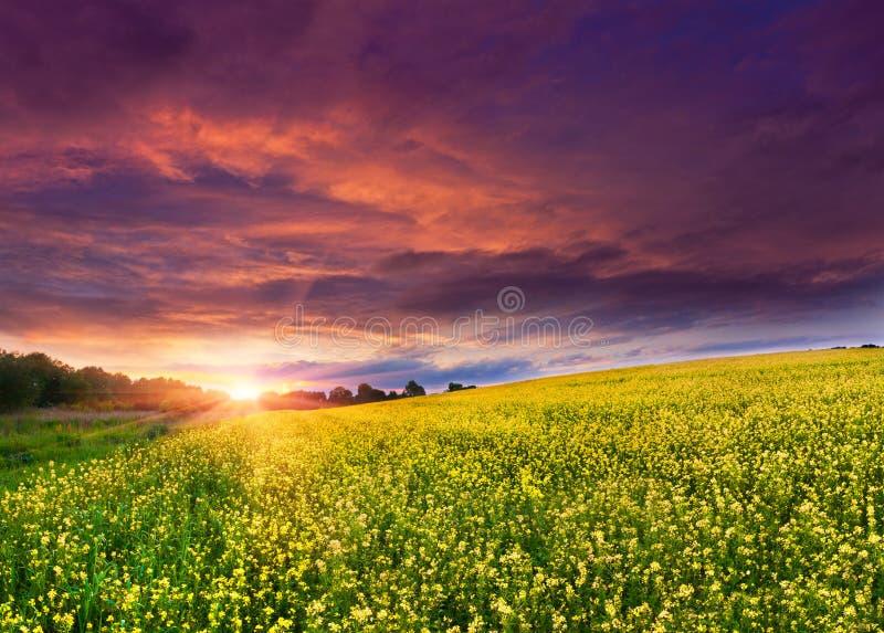 Sommer-Landschaft stockfoto