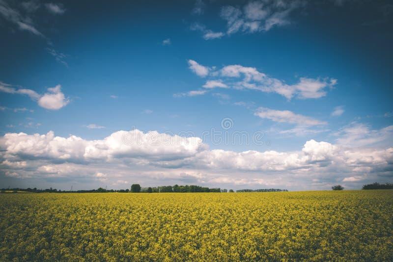 Sommer-Landschaft mit Rapssamen Feld und Wolken - Weinlesefilm e stockfotografie