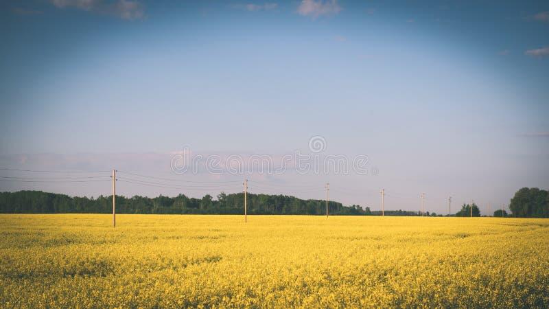 Sommer-Landschaft mit Rapssamen Feld und Wolken - Weinlesefilm e lizenzfreies stockbild