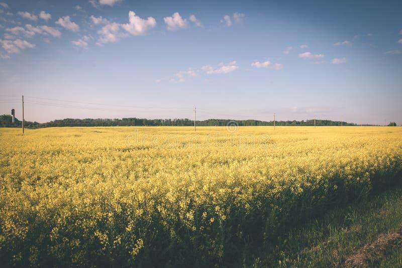 Sommer-Landschaft mit Rapssamen Feld und Wolken - Weinlesefilm e lizenzfreie stockfotografie