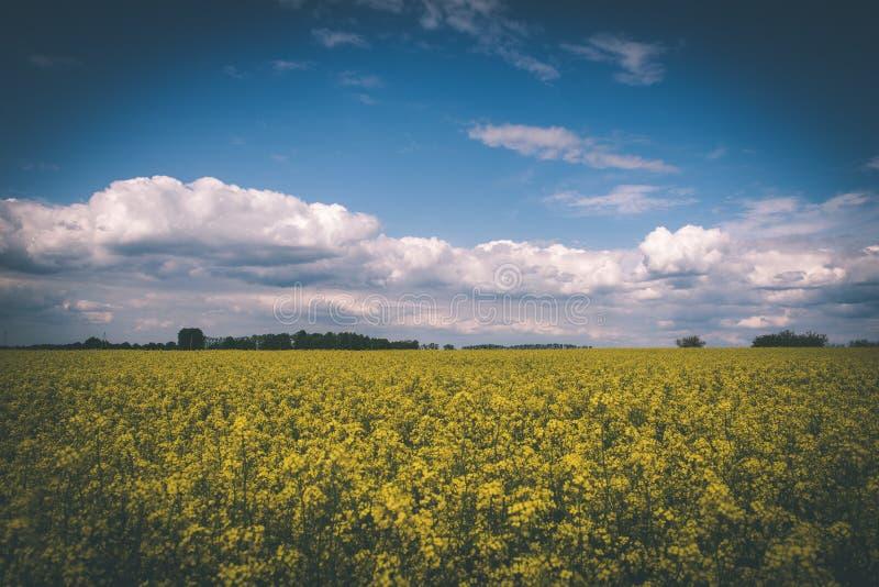 Sommer-Landschaft mit Rapssamen Feld und Wolken - Weinlesefilm e lizenzfreie stockbilder