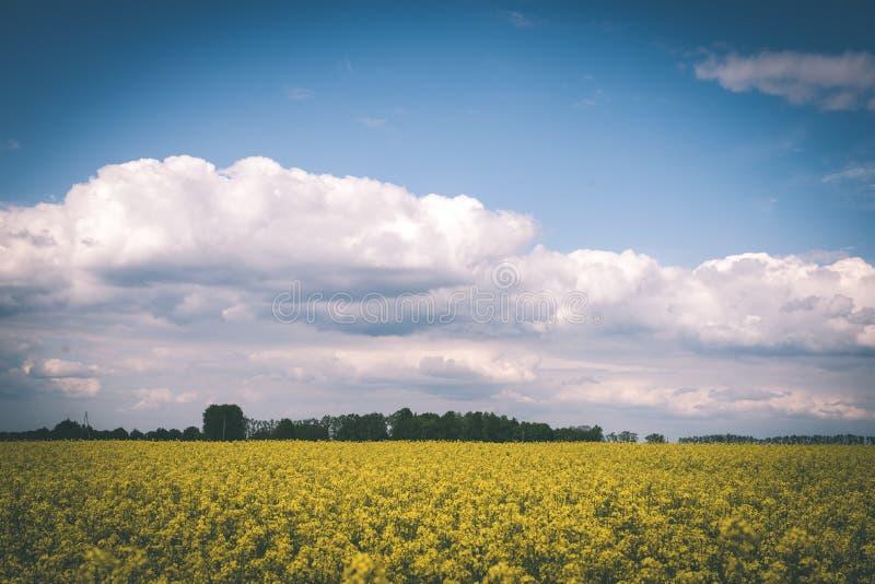 Sommer-Landschaft mit Rapssamen Feld und Wolken - Weinlesefilm e stockbilder