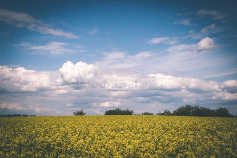 Sommer-Landschaft mit Rapssamen Feld und Wolken - Weinlesefilm e lizenzfreies stockfoto
