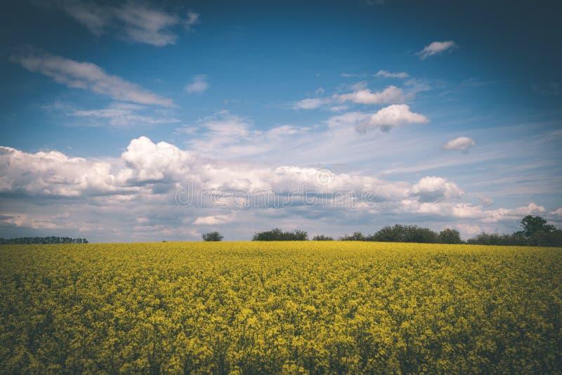 Sommer-Landschaft mit Rapssamen Feld und Wolken - Weinlesefilm e stockfotos