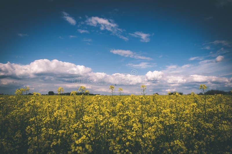 Sommer-Landschaft mit Rapssamen Feld und Wolken - Weinlesefilm e stockfoto