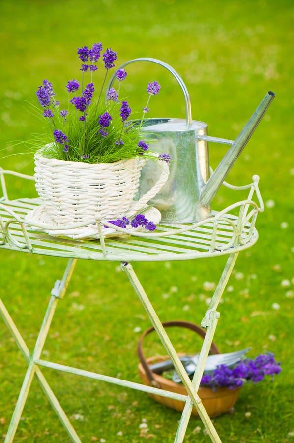 Sommer-Lavendel stockbild