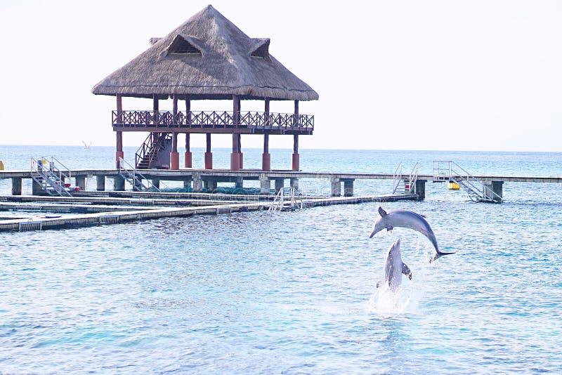 Sommer mit Delphin stockbilder