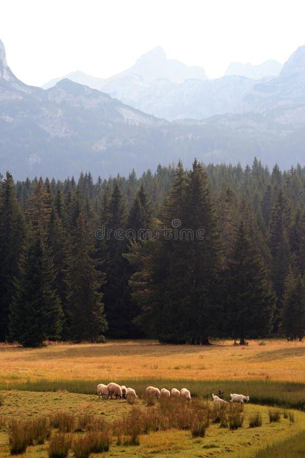 Sommer in Montenegro lizenzfreies stockbild